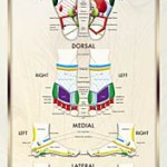 The Academy's Foot Reflexology Poster