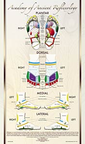 The Academy's Foot Reflexology Poster
