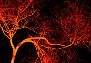 Love Those Capillaries!