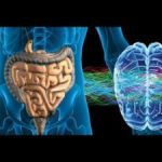 Your Gut Is Wiser Than You Think